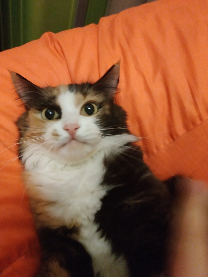 Шел 9 день карантина, кошка больше не может меня видеть