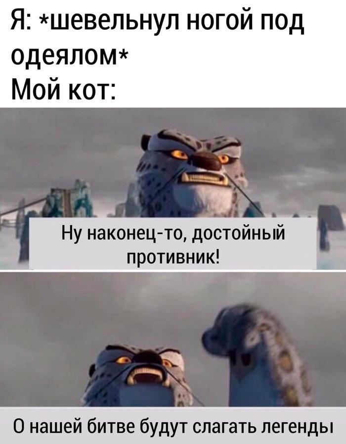 Опасный кот