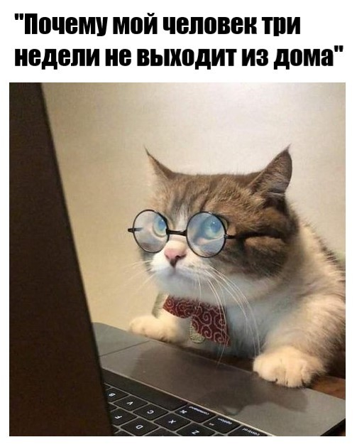 """Когда """"достал"""" своего кота"""