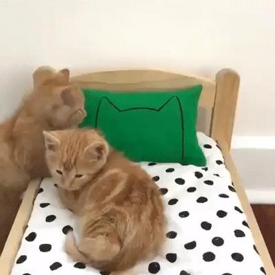 Котятки спят в кроватке