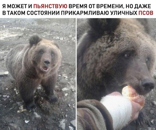 Все бы так Медведь, Юмор, Картинка с текстом, Пьянство