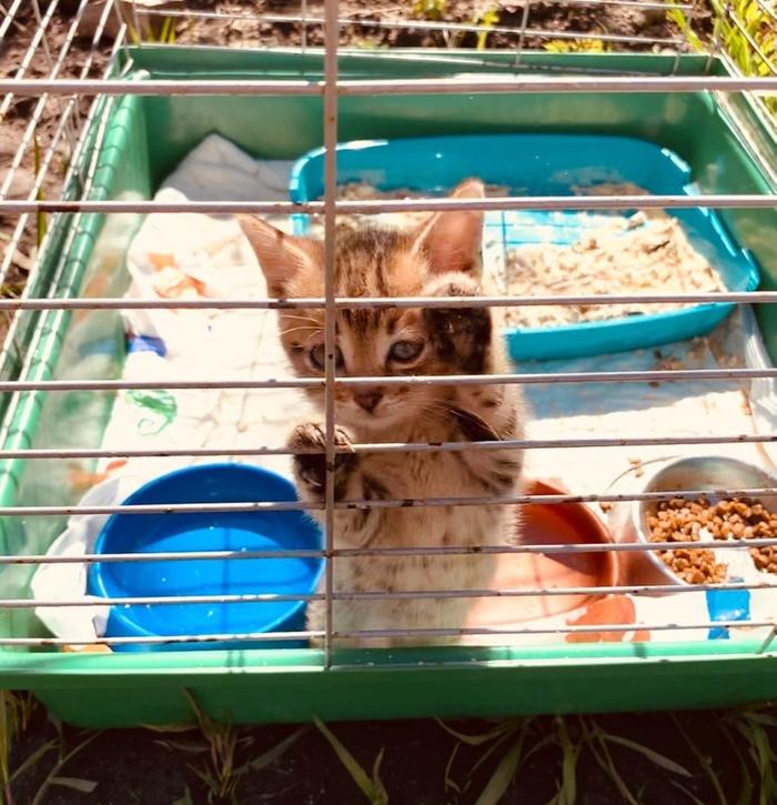 Продолжение поста У нас новый котёнок и он ищет свой дом. Санкт-Петербург и Ленинградская область