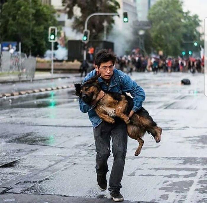 Мужчина уносит свою собаку от слезоточивого газа во время протестов (в Чили)