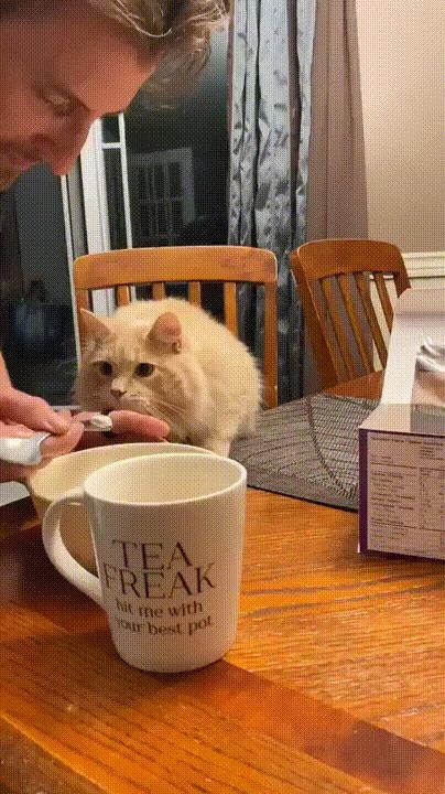Котик пришел в невероятный восторг от вкуснейшего мороженого