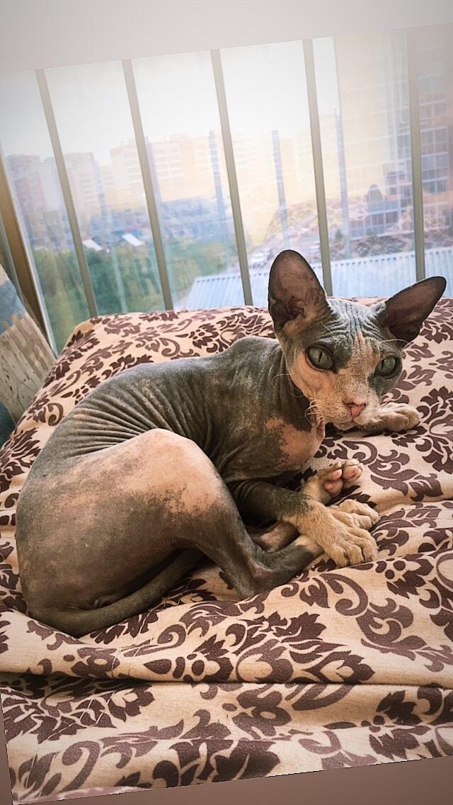 Кошка Глясе:3