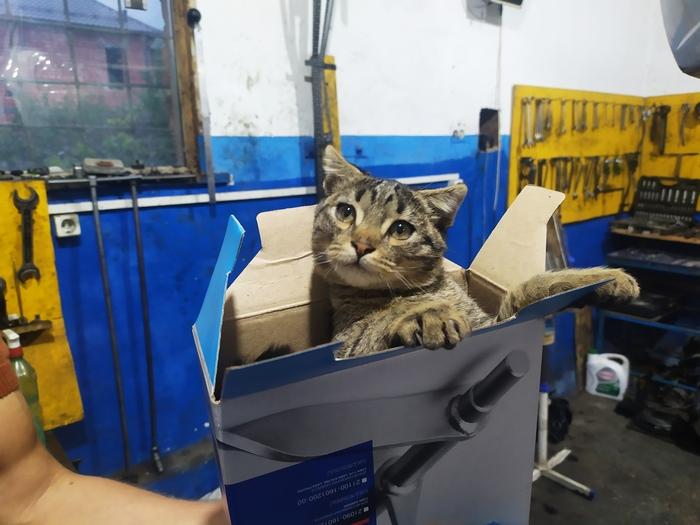 100 оригинальный кот