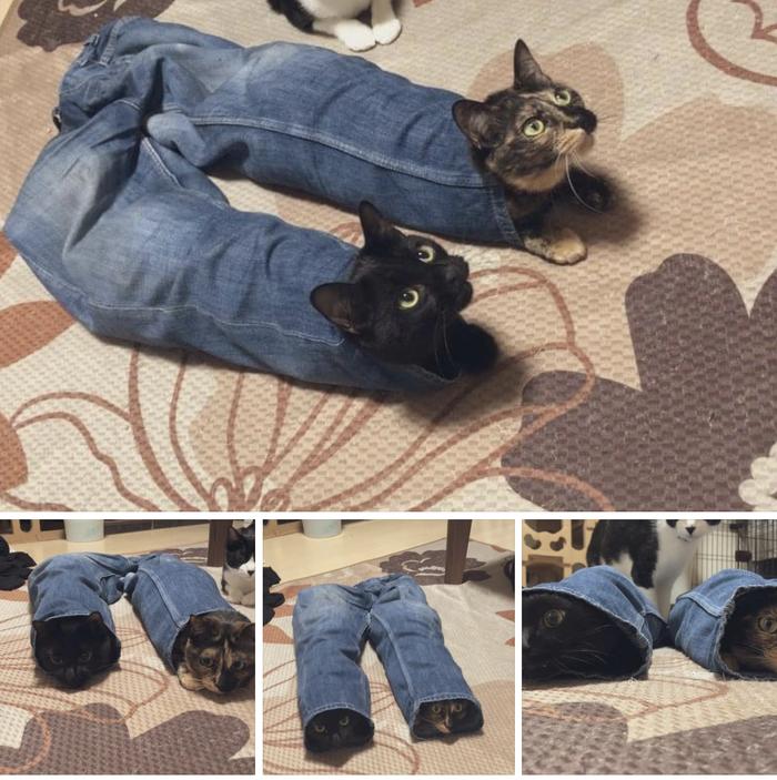 Если в доме ходят брюки, не пугайтесь, это глюки