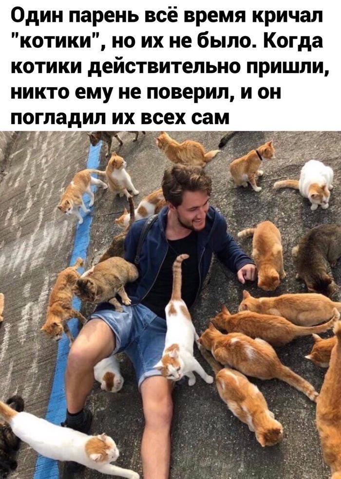 Котики!