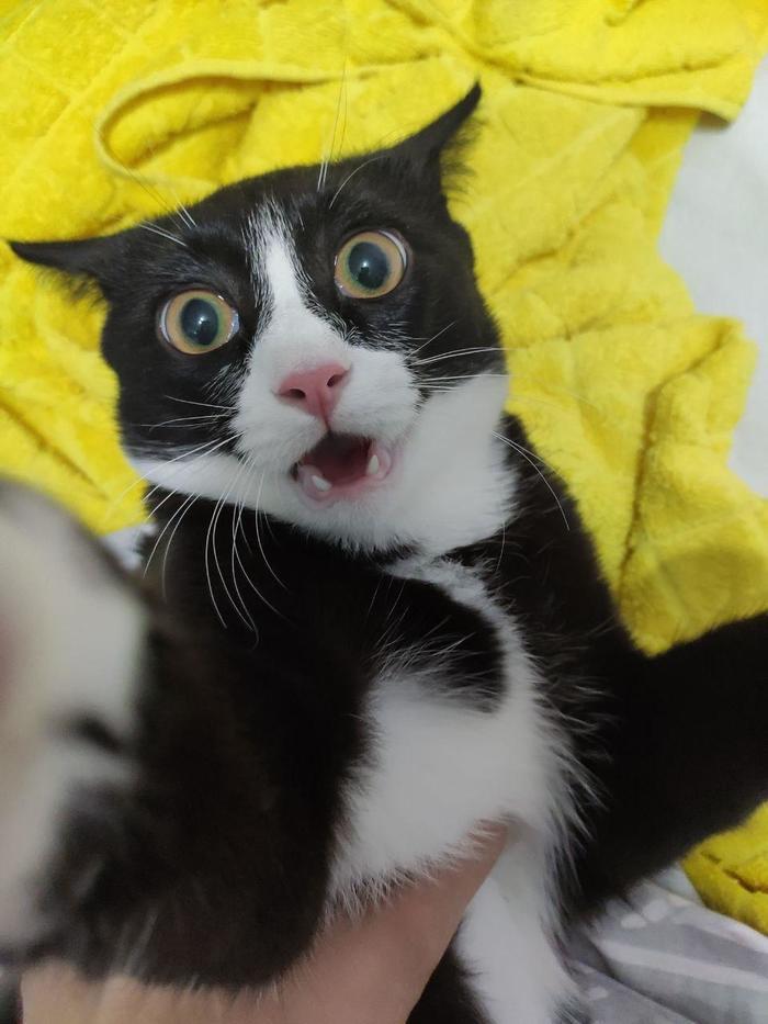 Упоротый кот
