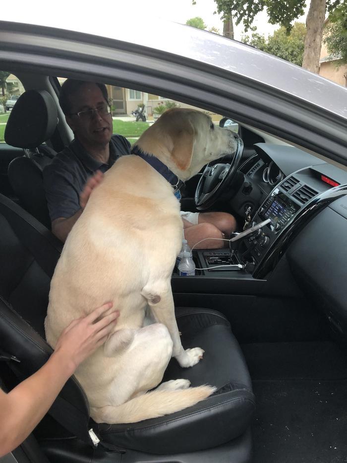 QuotНаш пес не видел моего отца несколько месяцев и теперь, после их встречи, отказывается выходить из его машиныquot