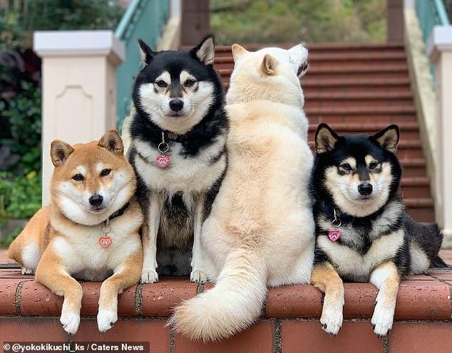 Милая собака, которая все время портит семейные фото