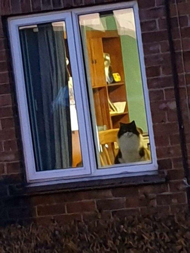 Quot... увидел своего кота в чужом доме.quot  котизм