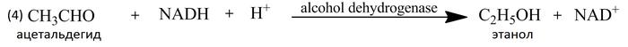 Биотехнологии каменного века. Алкоголь у истоков человеческой истории История, Химия, Алкоголь, Вино, Пиво, Каменный век, Длиннопост