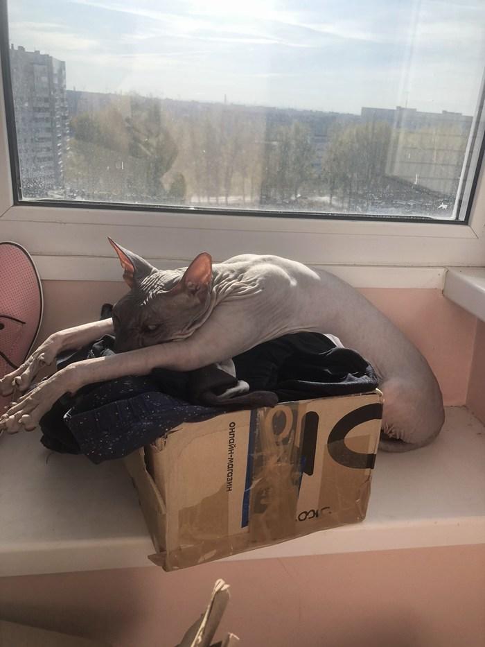 Уставший скупердяй
