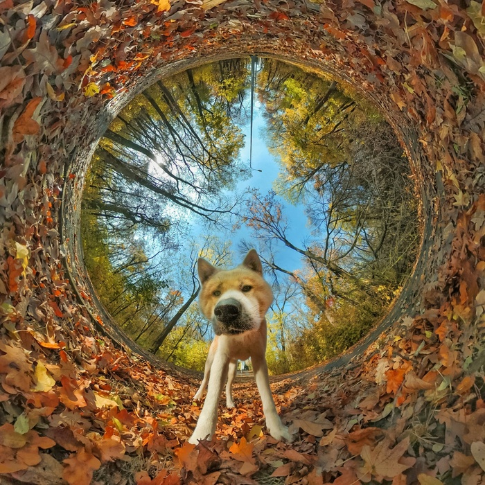 Хороший мальчик в осеннем лесу