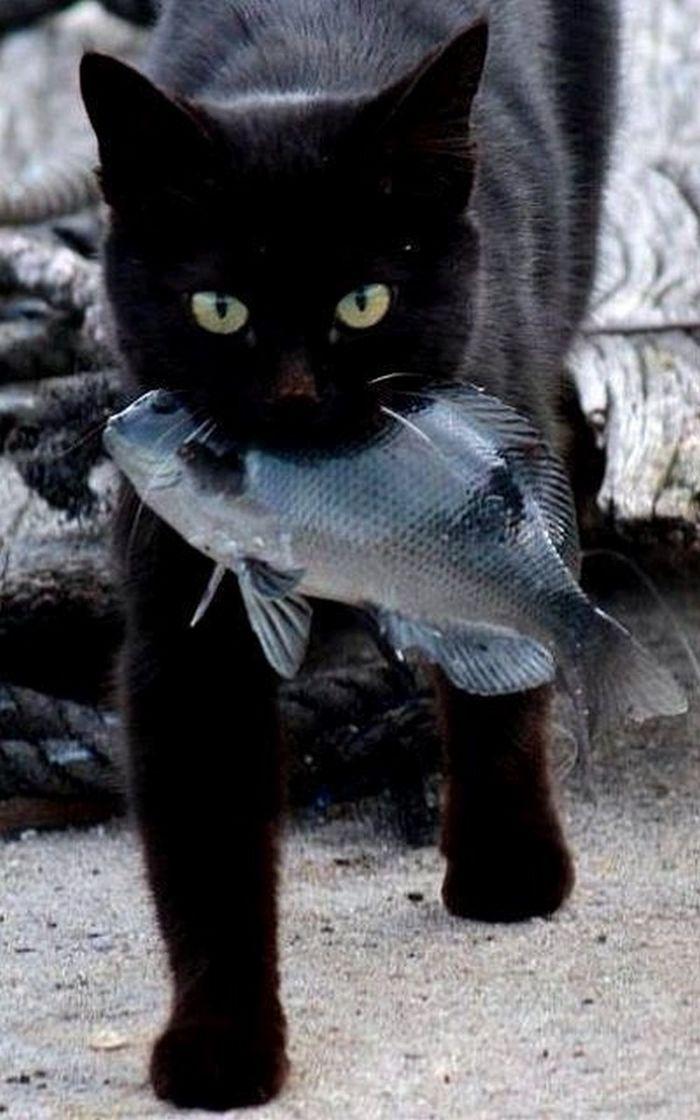Удачная рыбалка...