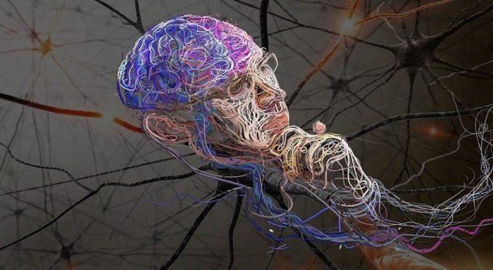 В чем сходство устройство человеческого мозга в процессе рождения идей с конвейером моторчик стеклоочистителя транспортер т4