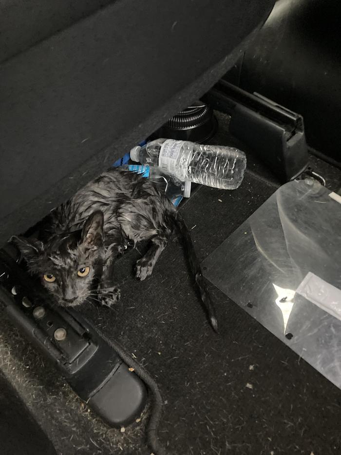 QuotВо время поездки по автостраде  увидел этого кота прямо на дороге. Я остановился и выхватил его из потока машин. Теперь он живёт у насquot
