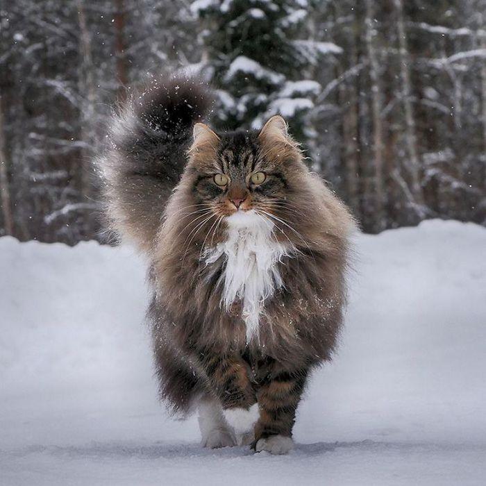 Зимний лорд...