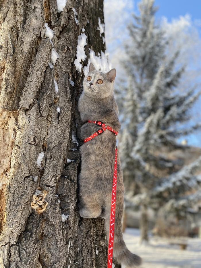 Первый снег у кошки