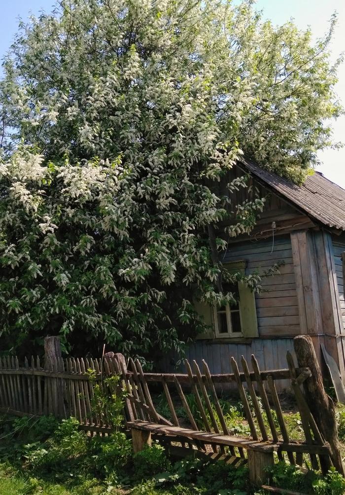 Деревенька моя, деревянная, дальняя