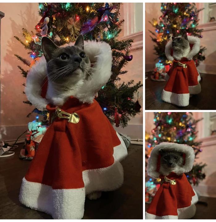Кошачий Санта