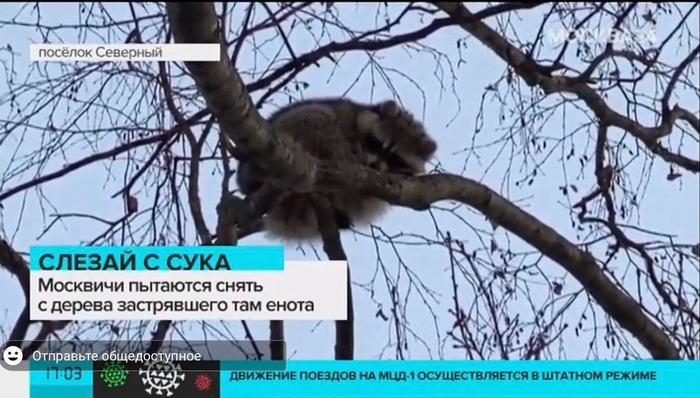 Забавный заголовок)