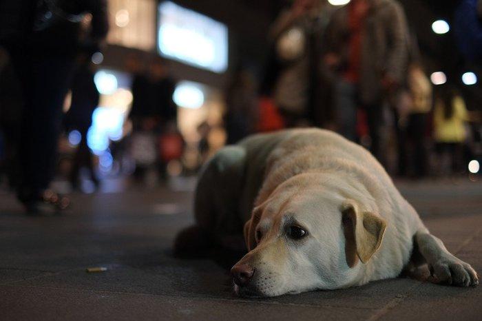 В Москве появился сервис по поиску домашних животных