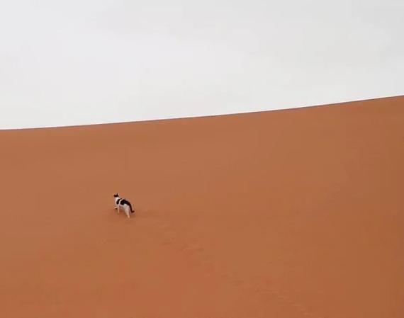 Кот в пустыне