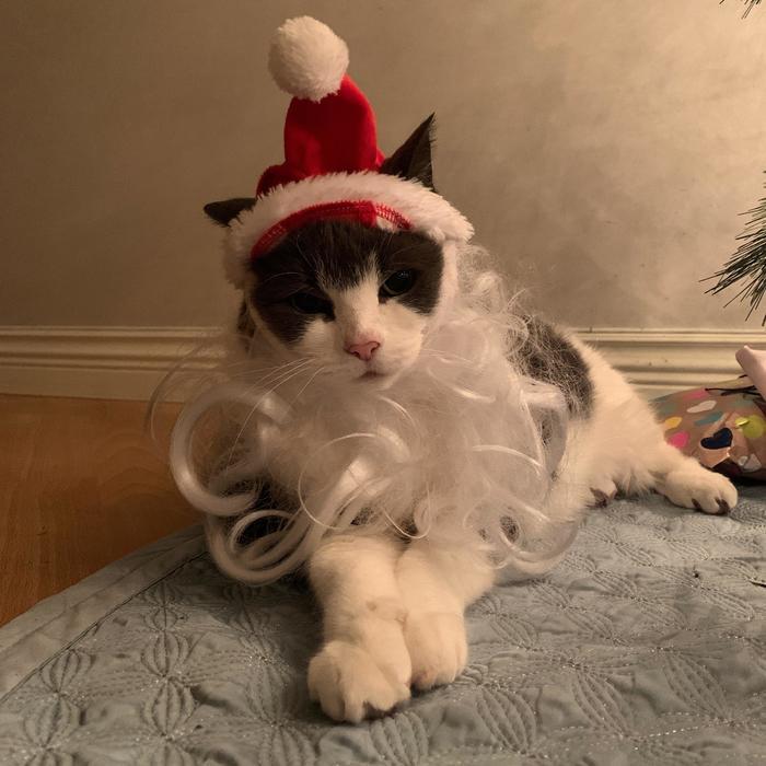 Я тебе под ёлкой подарок оставил, иди убери
