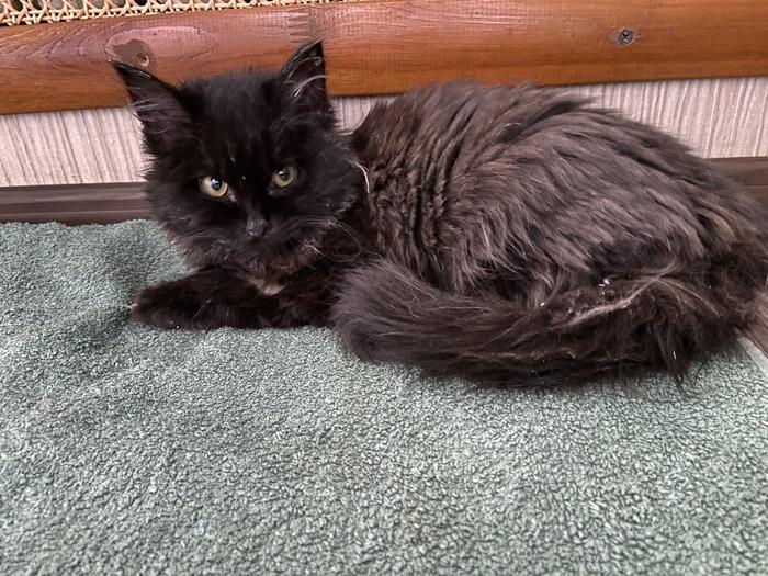 Ищем донора для котёнка. Алматы
