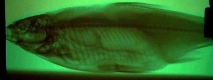 Рентген-безделушка дома