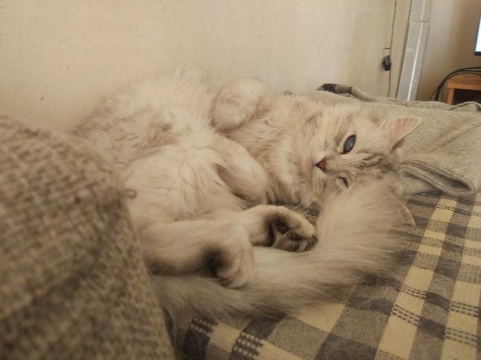 Моя слепая Котя