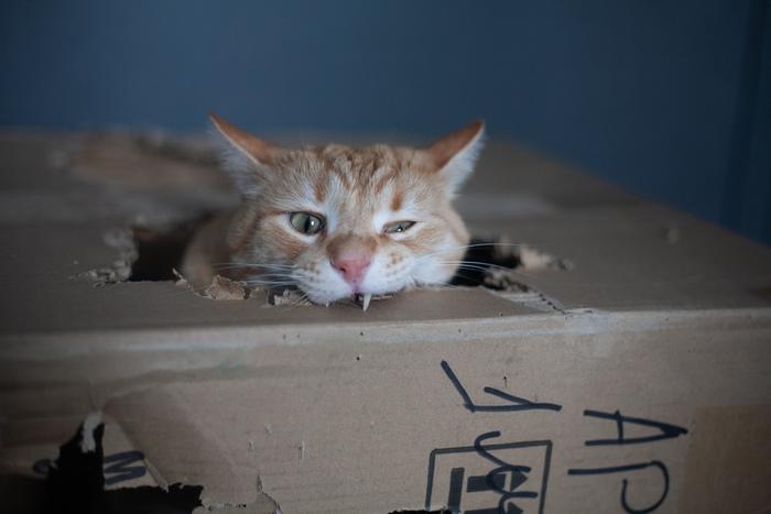 Кот грызёт коробку