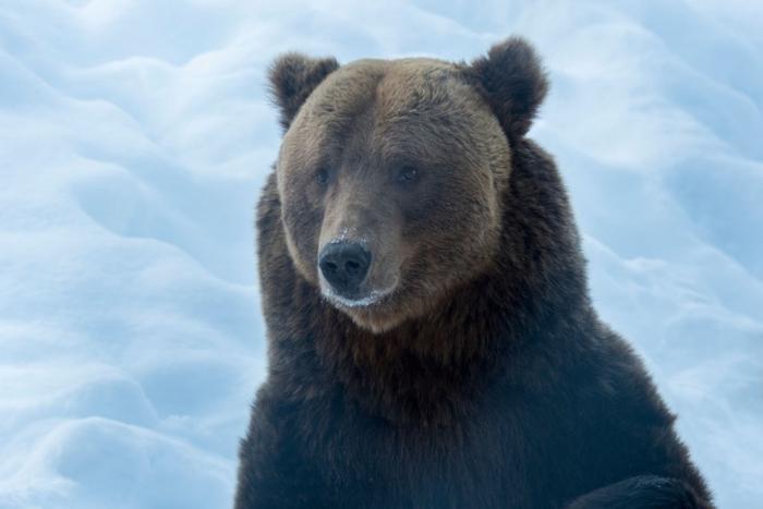 Интерьер дома после визита медведя-шатуна
