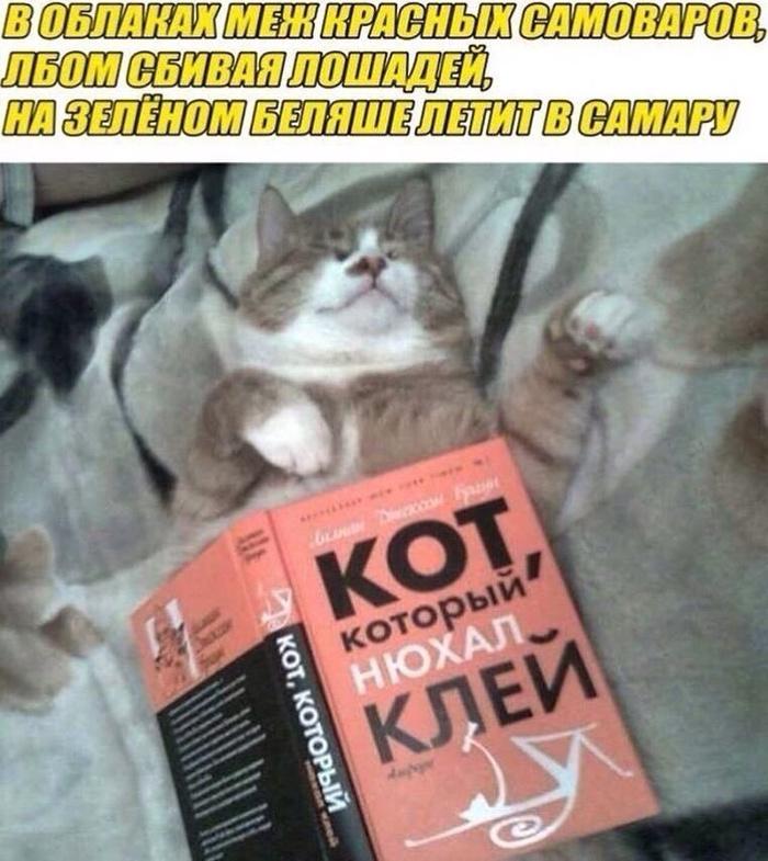 Котэ познает мир)
