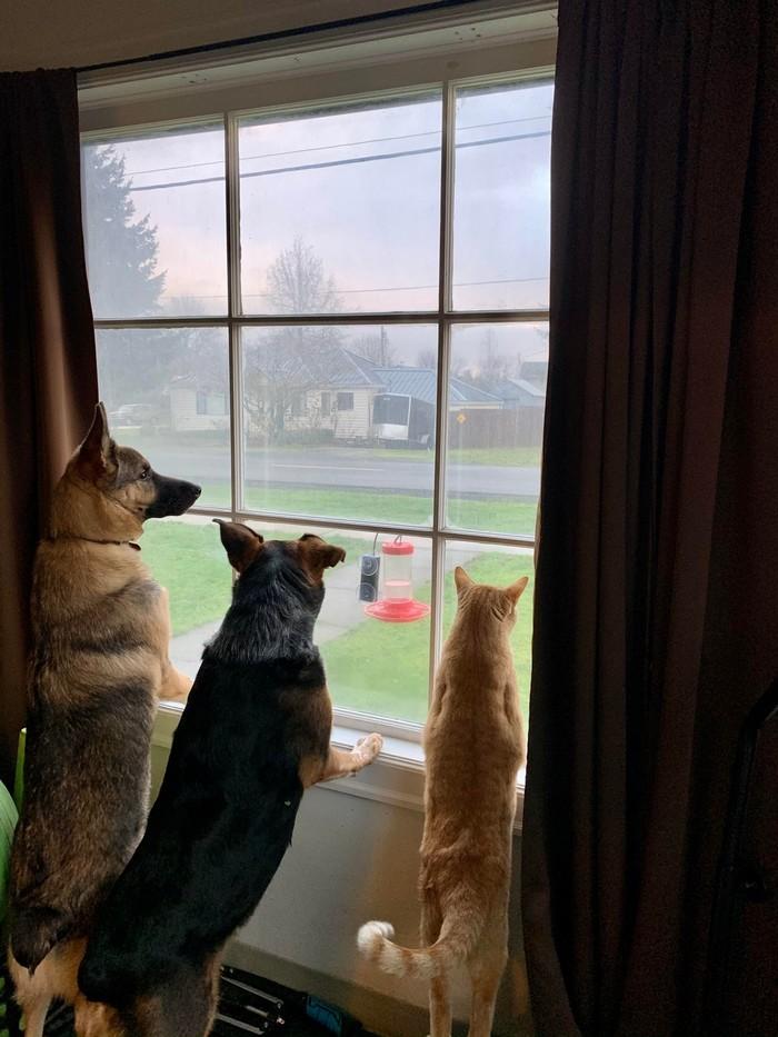 Парень переживал, что его котейка не поладит с собаками девушки, когда они съехались