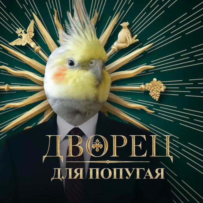 Как выглядит мой Дворец для попугая