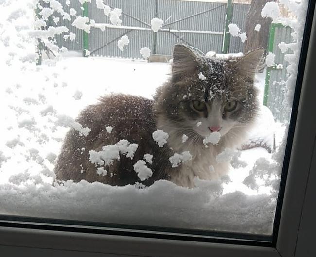 Котик за окном