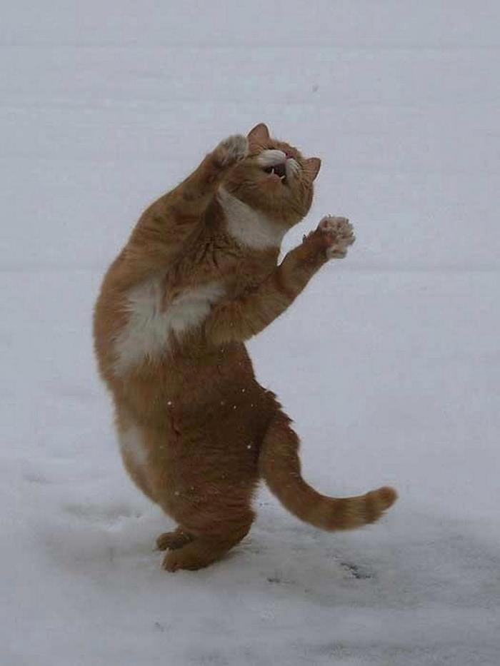 Победные танцы на снегу...