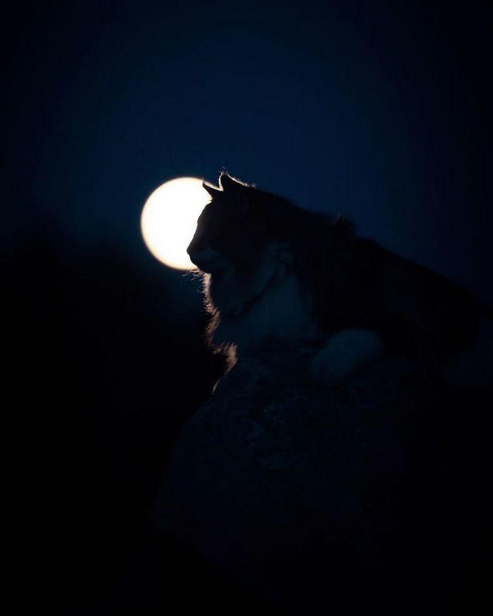 Лунный кот...