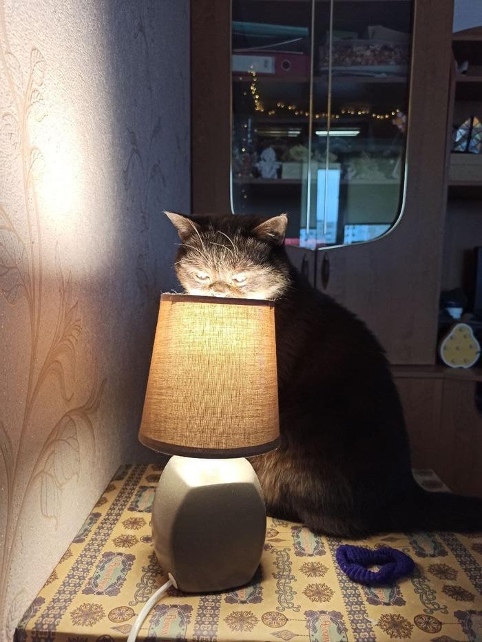 Продолжение поста Кот и лампа
