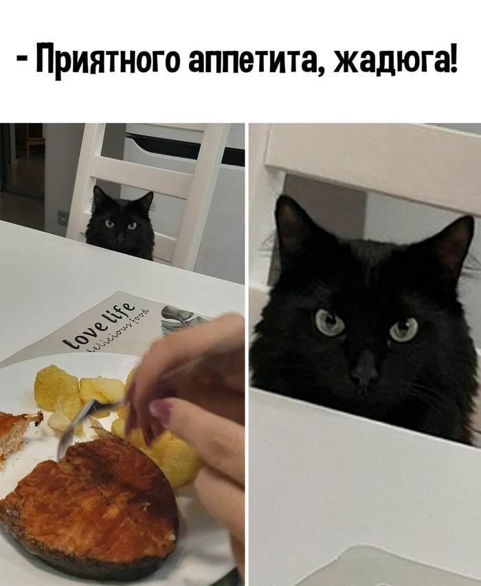 Мой котик, когда я завтракаю