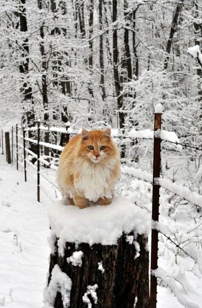 Солнышко в зимнем лесу...