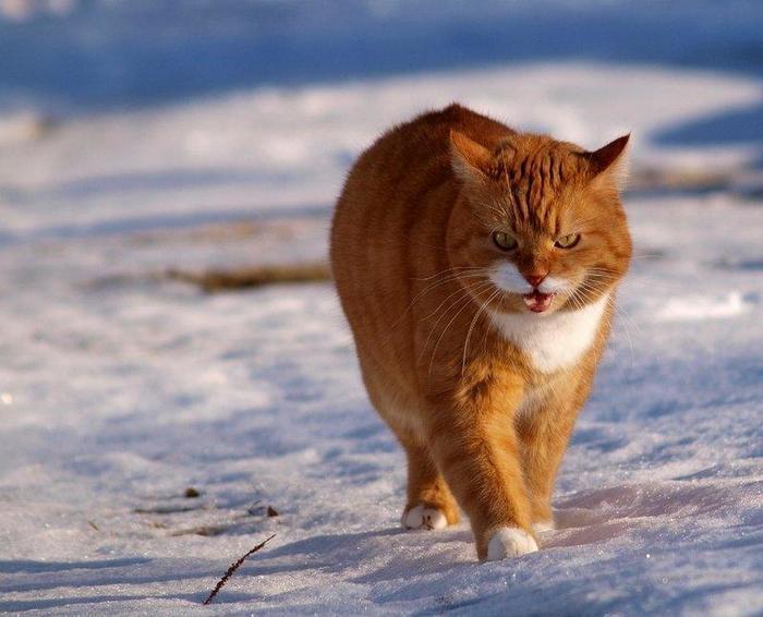 Это моя территория... и мыши на ней мои!