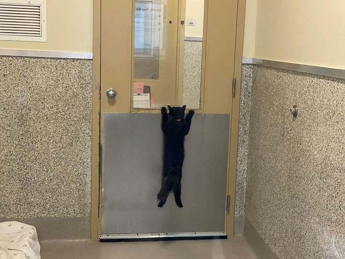 QuotЭтот кот ждет своего нового хозяина в местном приютеquot