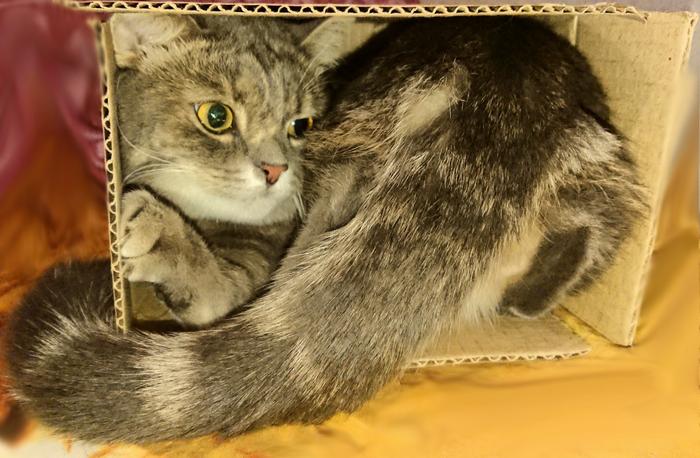 Жидкий кот и маленькая коробочка