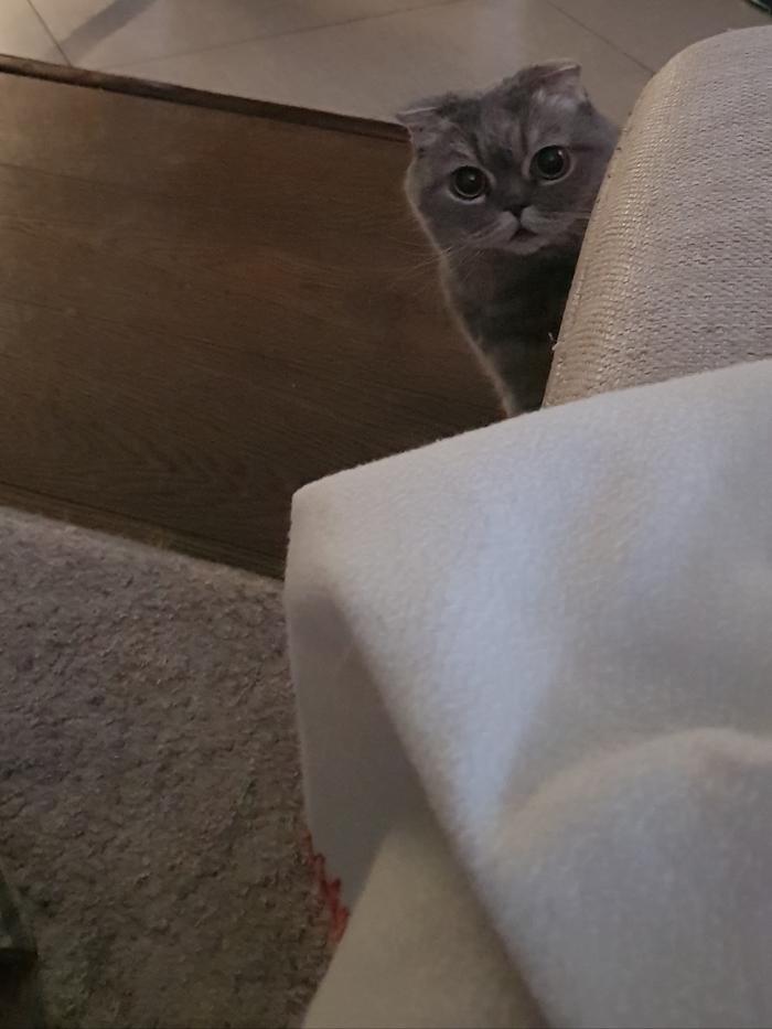 Ты вставать собираешься? Покормить, например, меня...
