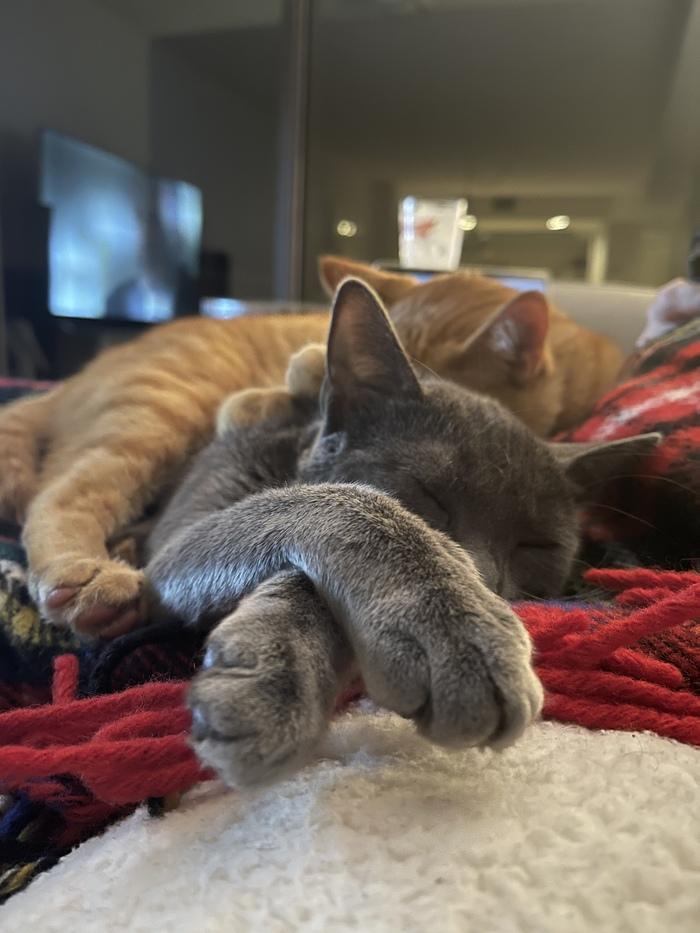 Котики такие котики