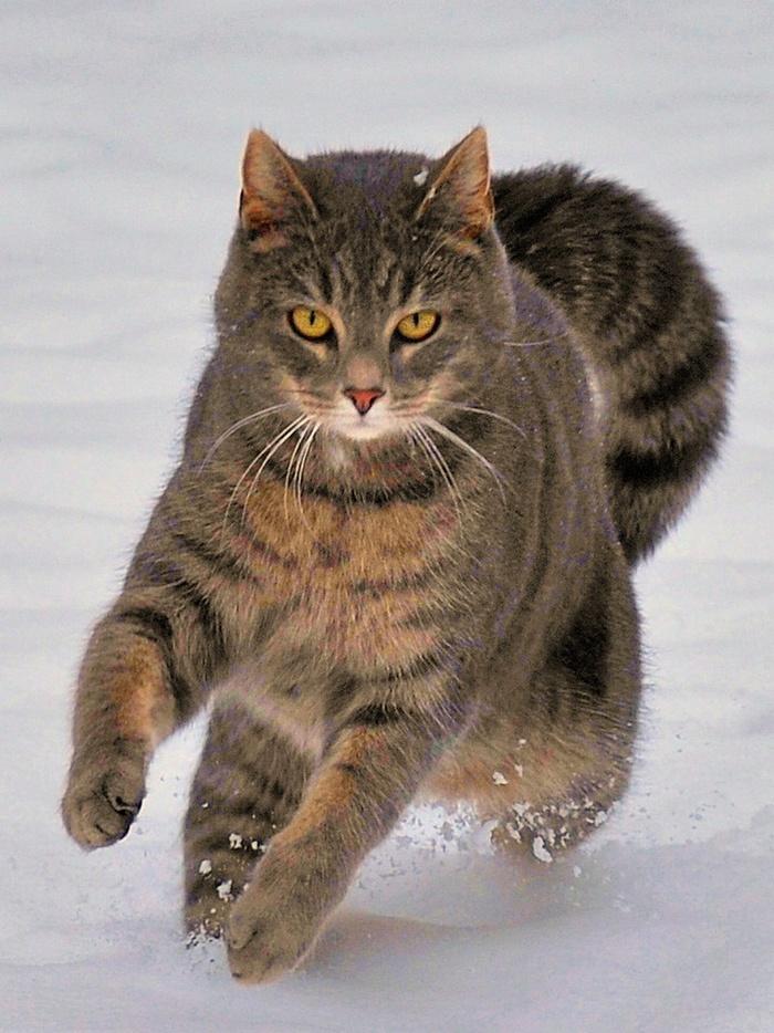 Котик мчится, котик скачет, вьётся снег из под когтей...